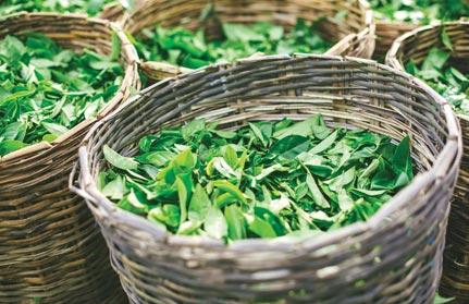 The Ethical Tea Society